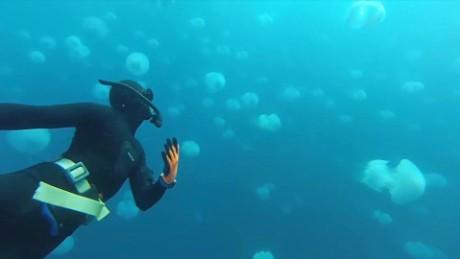 israel jellyfish oren liebermann pkg_00000000