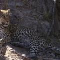 spc inside africa botswana okavango delta c_00032407