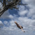 rachelle simpson tree