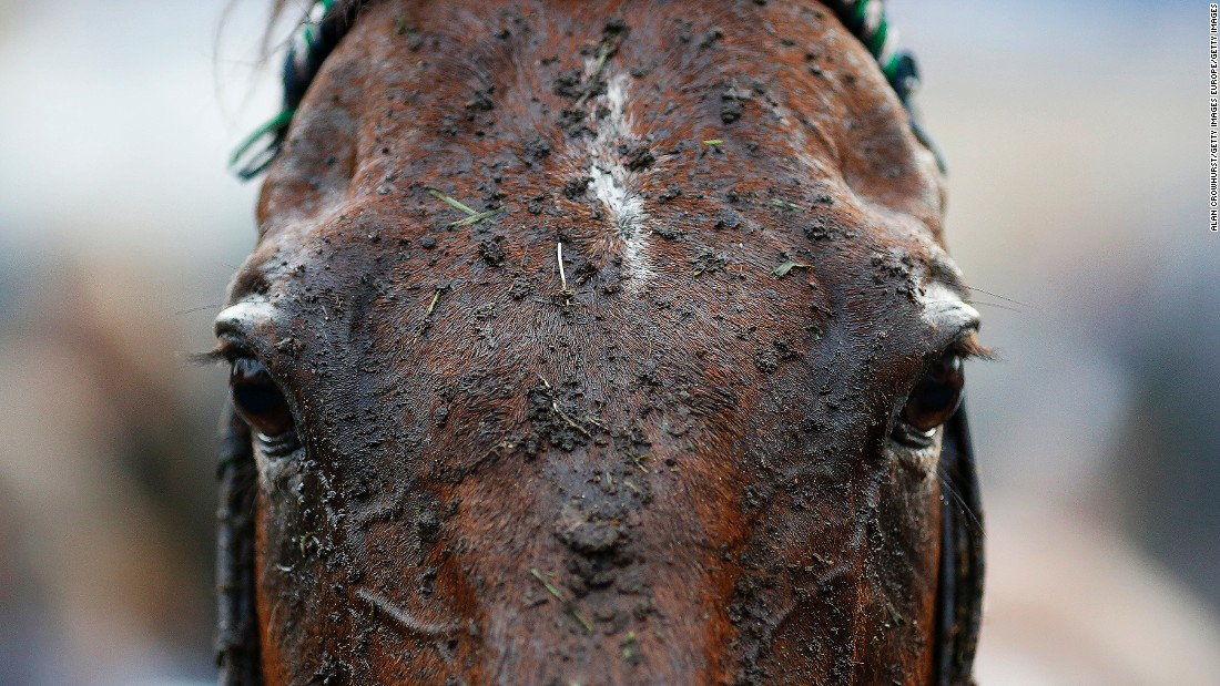 FONTWELL, ENGLAND - AUGUST 25: A muddy day at Fontwell racecourse on August 25, 2015 in Fontwell, England. (Photo by Alan Crowhurst/Getty Images)
