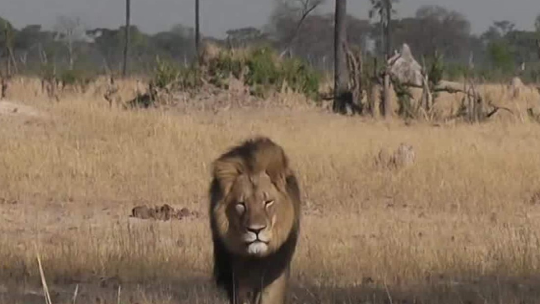 2 Years After Cecil The Lion's Death, Son Killed By Game Hunter