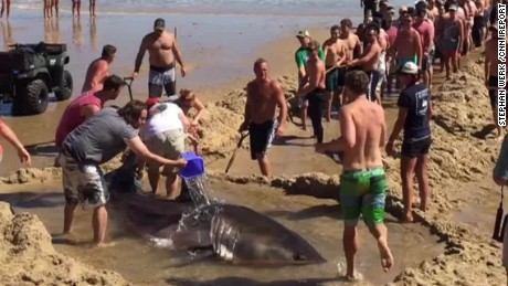 beachgoers try to rescue great white shark ireport sot_00001424.jpg