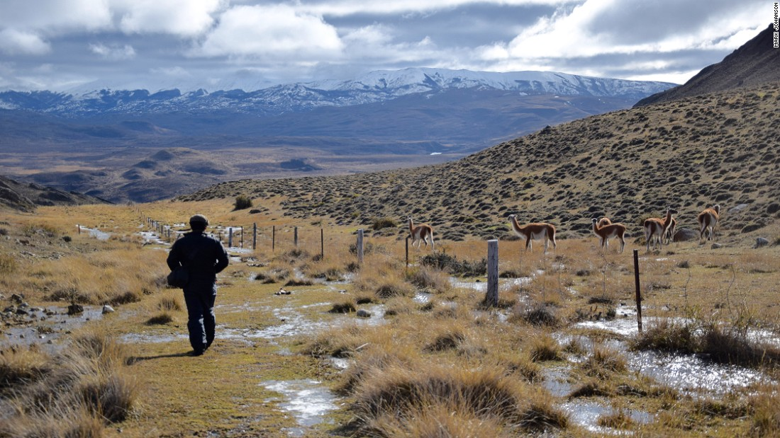To find pumas, Vargas keeps an eye on the guanacos.