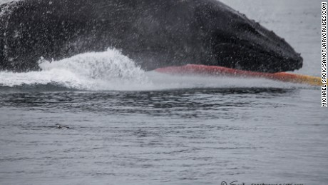 A humpback whale has a close encounter with two kayakers in California.