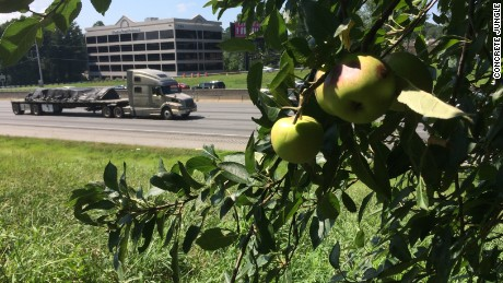 Concrete Jungle has mapped more than 2,500 fruit trees in Atlanta, many of which are alongside interstates and highways.