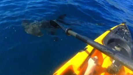 Kayaker fights hammerhead shark video pkg_00001119
