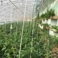 north korea farmersIMG_1459