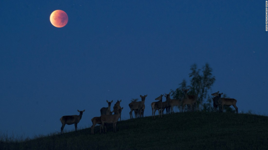 Deer are silhouetted against the sky in Yavterishki, Belarus, as the supermoon is eclipsed.