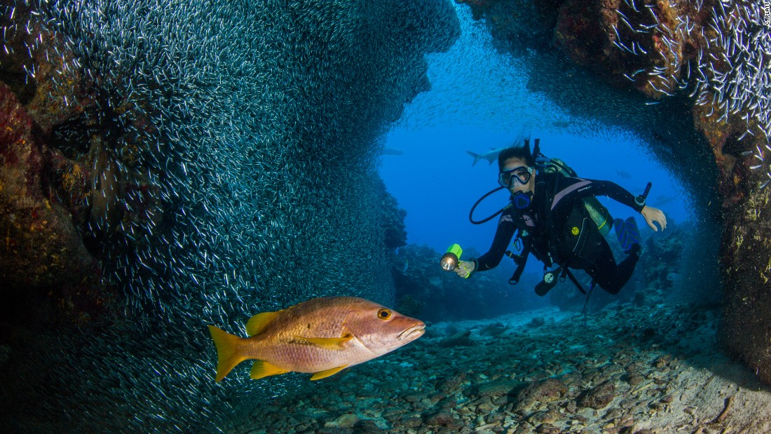 Grand Caymans coral reefs must not be destroyed Opinion CNN