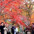 Gallery Kyoto
