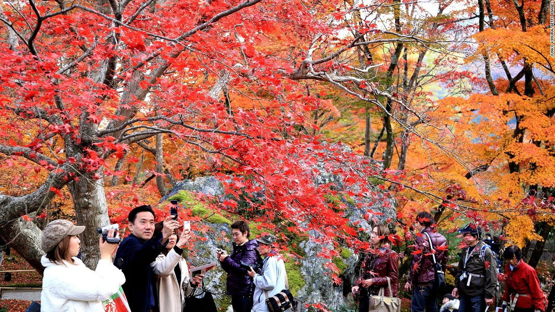 Autumn leaves are beloved throughout Japan, but people come from across the country to view them at sites such as Kyoto's Hogonin Temple.