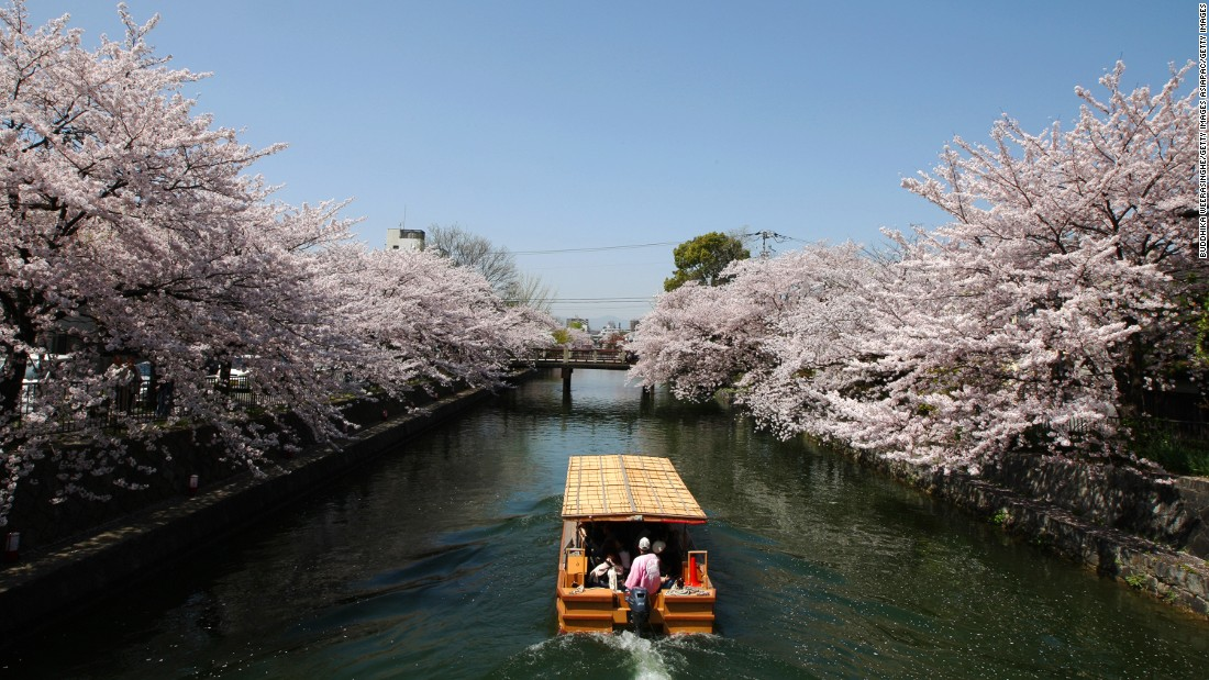 <strong>Cherry blossom season in Kyoto, Japan: </strong>When the cherry blossoms come out along Kyoto's Okazaki Canal in early April, the water reflects the pink blooms and it's like passing through a glorious floral tunnel.