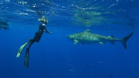 shark whisperer ocean ramsey intv _00012905