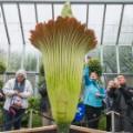 06 alice corpse flower