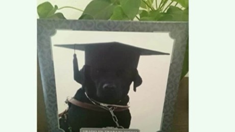 cnnee vo cafe oraa tendencies dog graduates from college_00001317