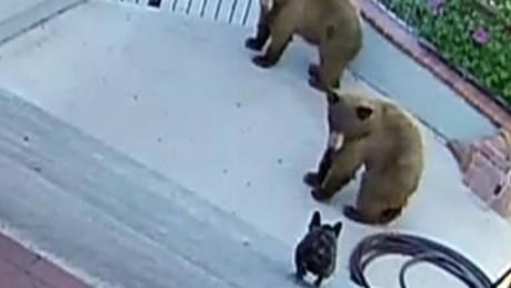 cnnee vo cafe dog scares bears _00000621