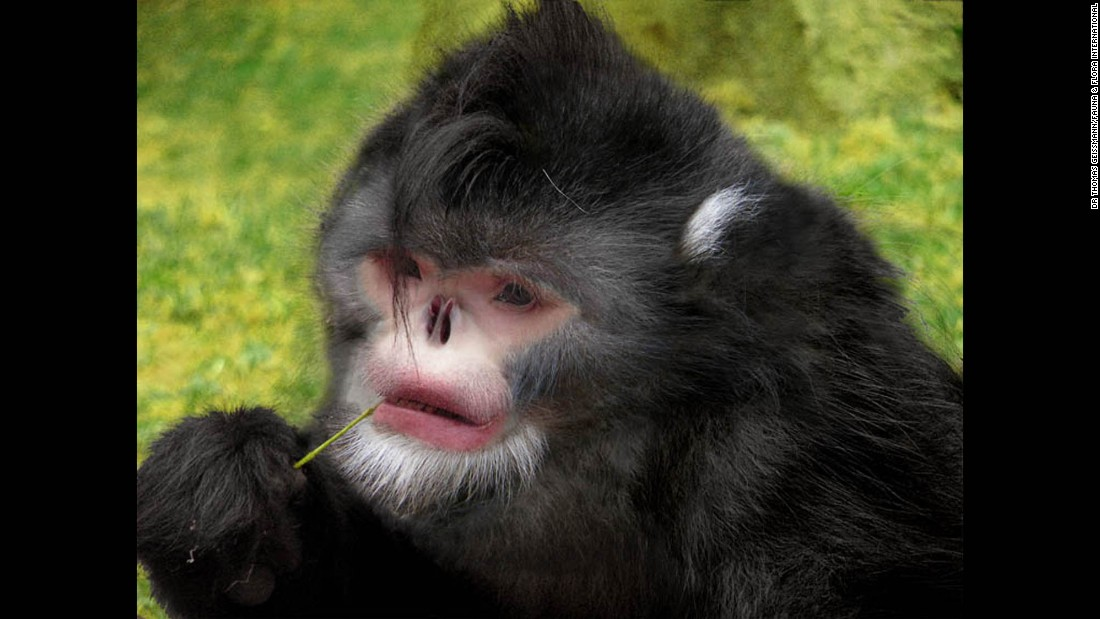 From 'Dracula' fish to snub-nosed monkeys: New species found in ...