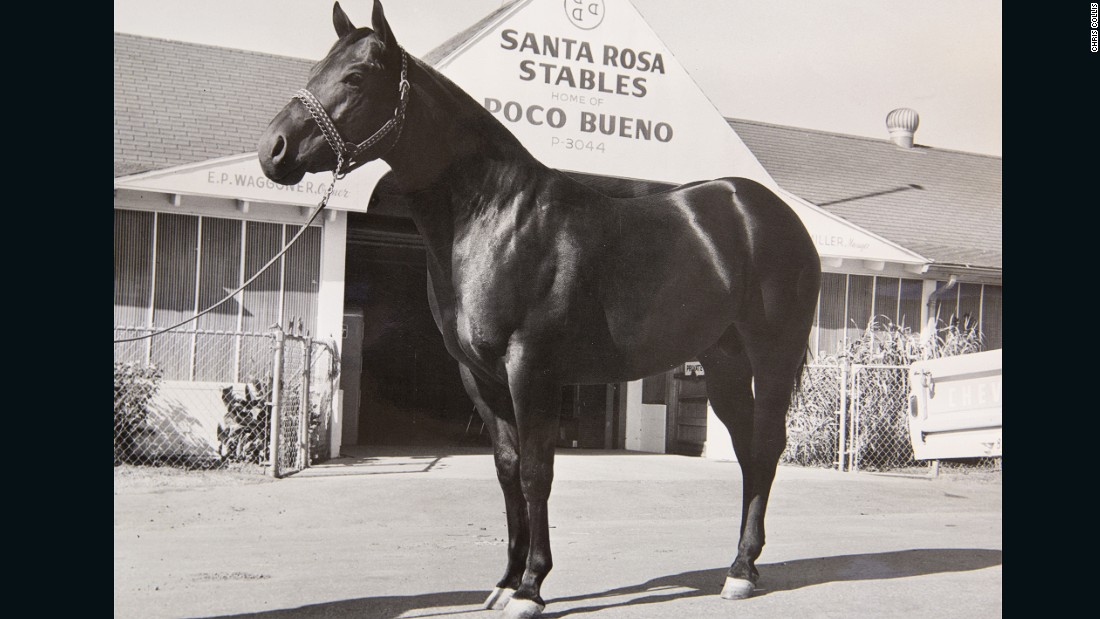 Even the animals are famous. Esteemed shire horse Poco Bueno, the first horse insured for $100,000, worked there and was buried standing fully upright at the behest of the Waggoner family.