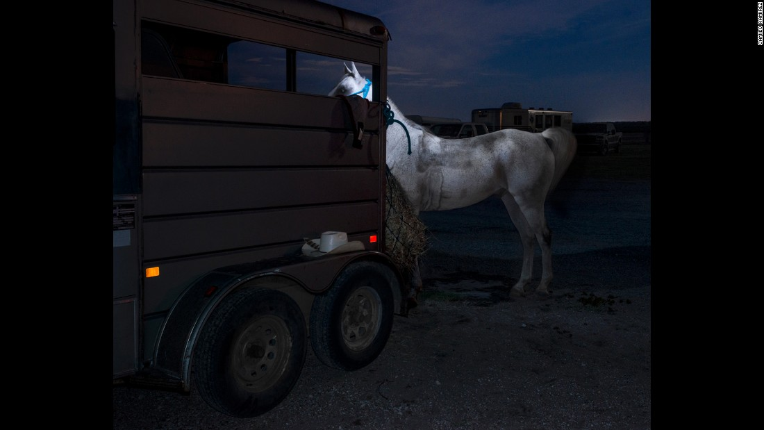 """Arabian Horse and Trailer"""