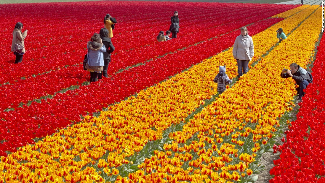 With its colorful fields of tulips, the Netherlands attracts plenty of tourists, but total business travel spending for last year also came to a whopping $17.8 billion.