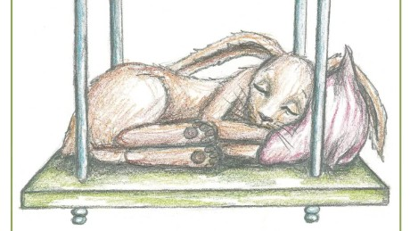 Book Puts Kids Sleep Rabbit orig_00001524