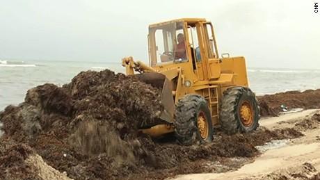 cnnee perez seaweed inavtion santo domingo _00002530