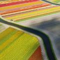 dronestagram tulip field