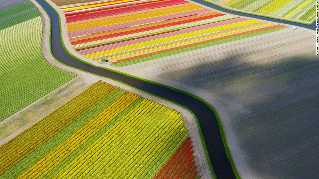 From this high up, the tulip fields of Holland appear like perfect ribbons of color threaded across the landscape.