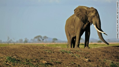 Swaziland plans to transfer 18 elephants to zoos in Dallas, Kansas and Nebraska.