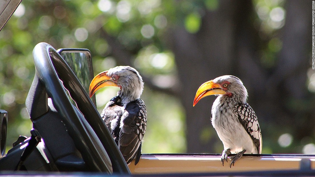 """""""You steer, I'll press the pedals."""" Photo by Christina Alexander."""