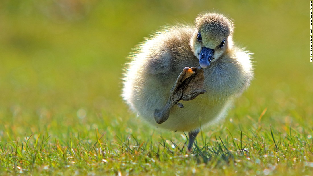 This threatening little bird appears to be telling photographer Eric Gessmann to keep his distance.