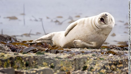 Comedy Wildlife Photography Awards closes, first round on Judging complete, finalists images released.
