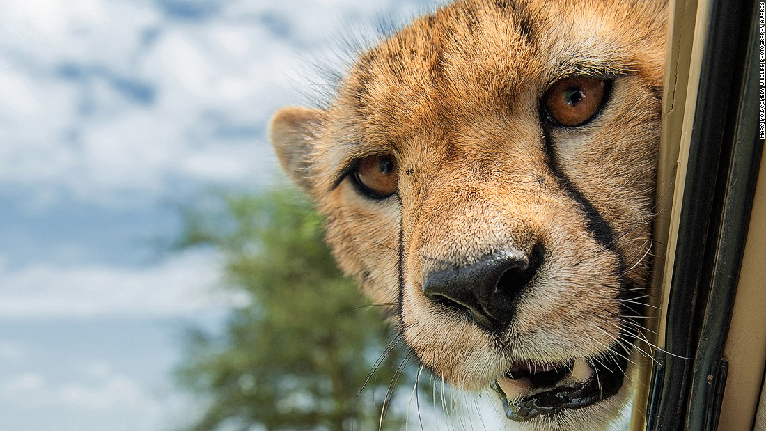 """""""Got any snacks in there?"""" One of two photos by Marc Mol that made the finals."""