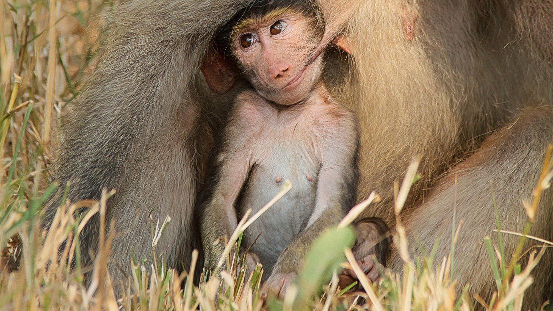 Unfortunately for this mom, lanolin nipple creams aren't widely available in the jungle. Photo by Renata Ewald.