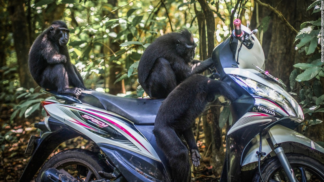 """""""Come on. He must have left the keys around here somewhere."""" Photo by Simon Slater."""