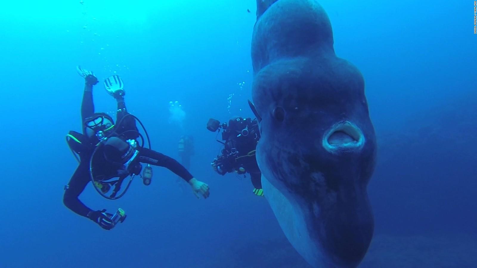 <strong>Portekiz Kıyılarında Muazzam Bir Güneş Balığı</strong>