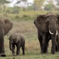 otr tanzania elephants