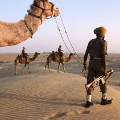 steve mccurry camel