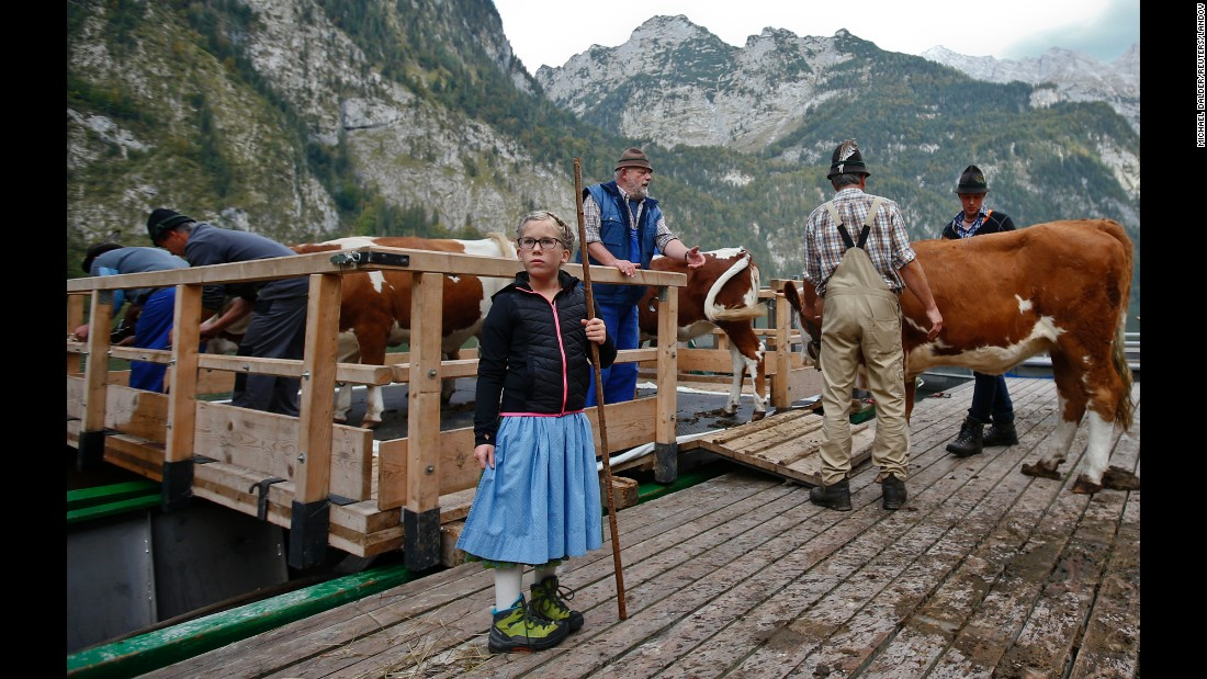 These Bavarian farmers are preparing for the winter season by driving their cattle down from Alpine meadows and bringing them to a narrow valley only accessible by sailing over Lake Konigssee.