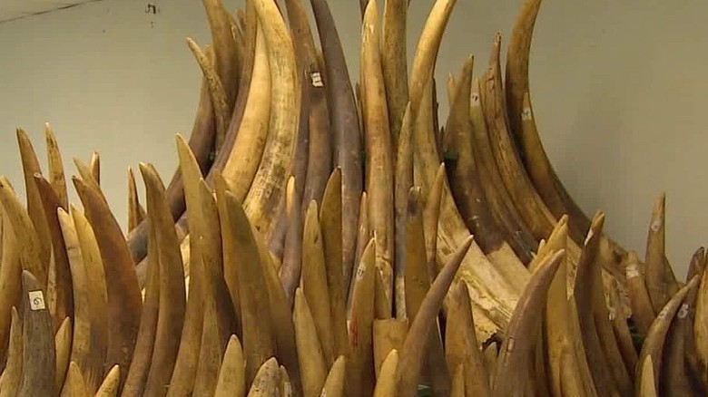 Hong Kong to phase out ivory sales