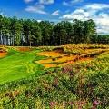 Golf Initiative Tobacco Road