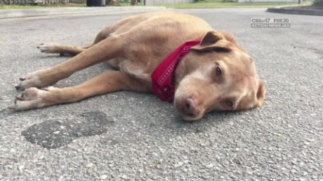 Dog refuses to leave place owner died florida_00000129