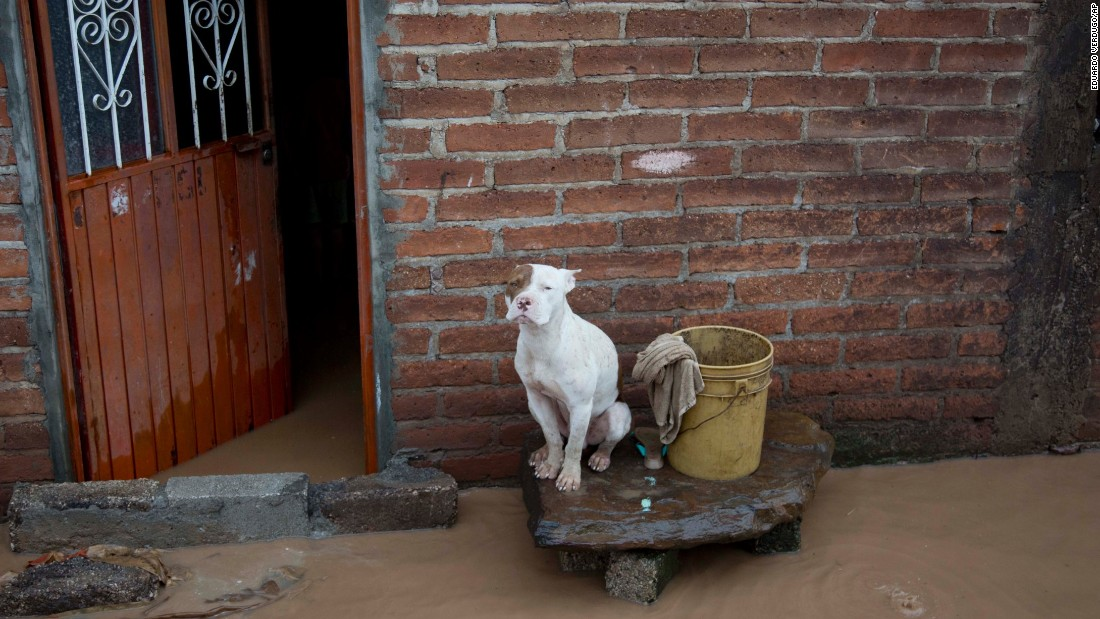 A dog sits outside a flooded house on October 24 in Zoatlan, Mexico.