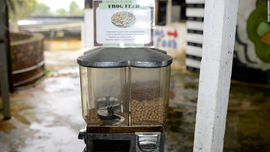 Visitors are invited to feed the grown frogs pellets from a dispenser.