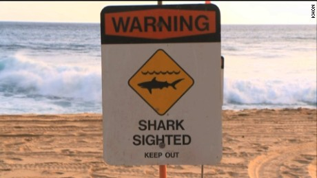 Officials in Hawaii posted shark warning signs after child attacked