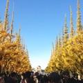 Tokyo fall leaves Icho