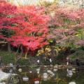 Tokyo fall leaves KK Garden