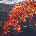 Tokyo fall leaves Mitake