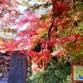 Tokyo fall leaves Mount Takao