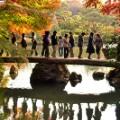 Tokyo fall leaves Rikugien